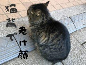 猫背で老け顔