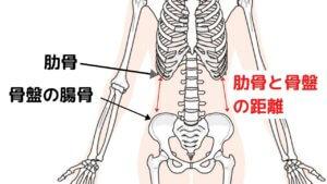 キレイなくびれを作るために骨盤を整えよう!