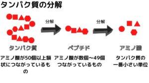 【レジスタントプロテイン】高野豆腐でダイエット!-2