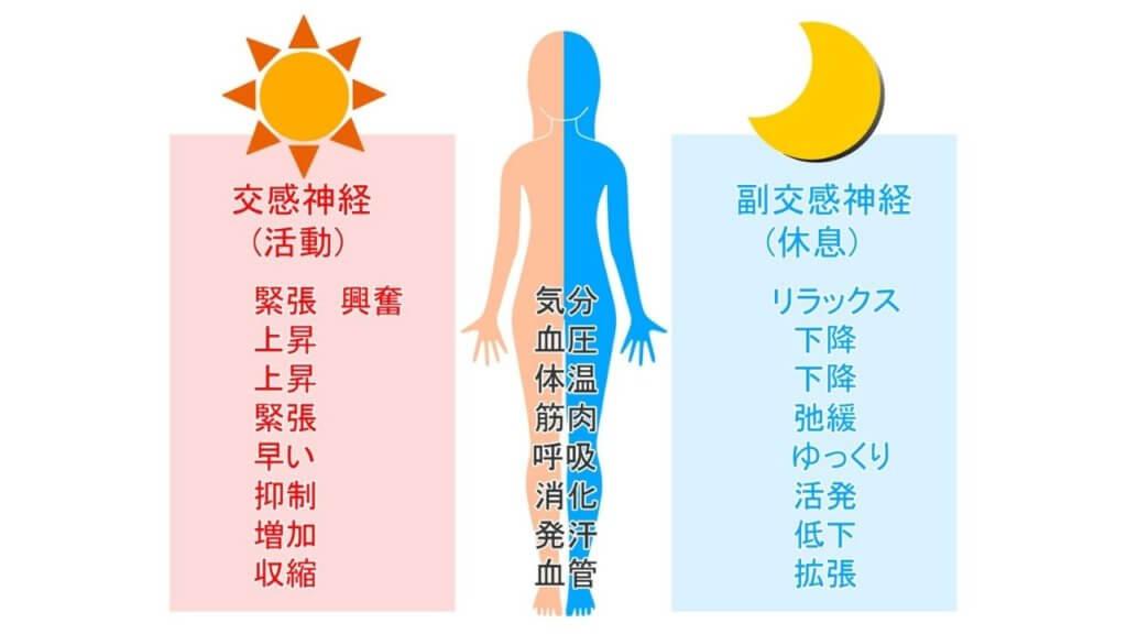 【自律神経】を整えて痩せ体質に!!-4