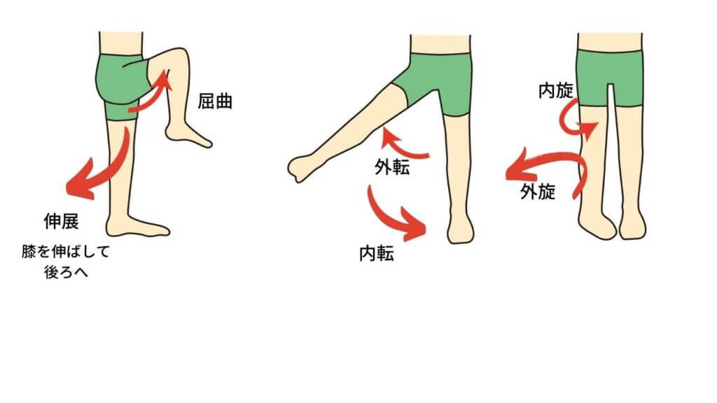反り腰と坐骨神経痛-4