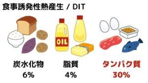 タンパク質は太りにくい?-4
