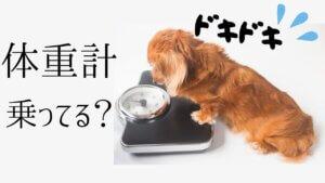 毎日、体重計にのっていますか?-2