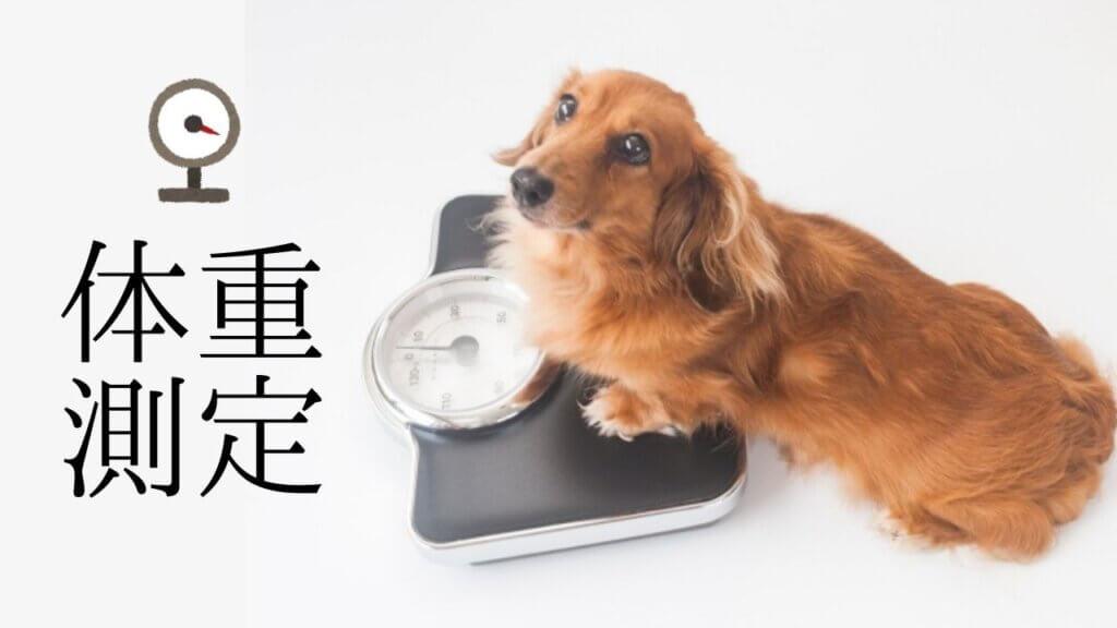 毎日、体重計にのっていますか?-4